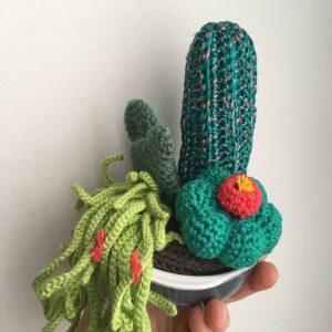 Composition florale cactus & succulente / pot céramique