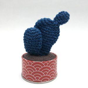 Cactus raquette bleu jeans